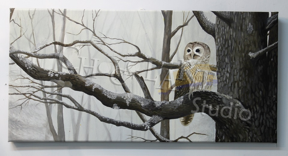 """A waiting owl"" by Alan Ng"